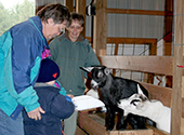 Sisters Margaret Roozen and Francette Malecha of Lil Farms feed a baby pygme goat in November of 2007.