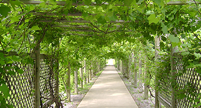 Notre Dame of Elm Grove grape arbor.