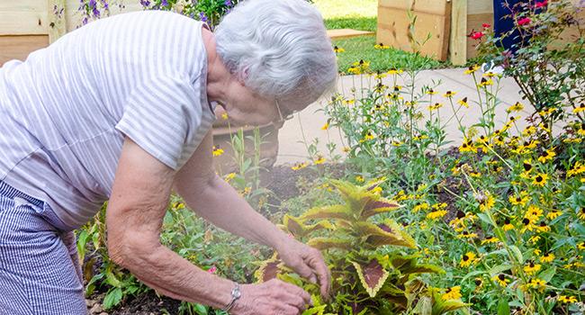 Sister Barbara Marie McInturff tends plans at the Caroline Garden located at Sancta Maria in Ripa, St. Louis.
