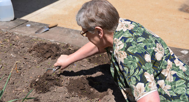 Sister Patricia Gravemann plants flowers for earth day in St. Louis.