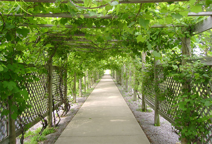 Grape arbor at Notre Dame of Elm Grove in Elm Grove, Wisconsin.
