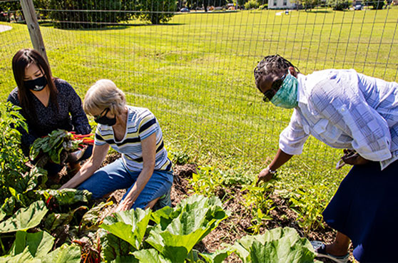 Sisters gardening at Mount Mary Universities community garden in Milwaukee.