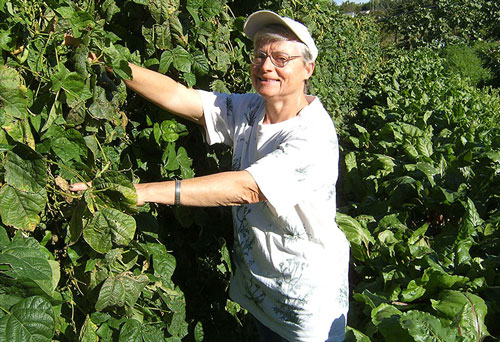 Sister Mary Beck is picking beans in the garden at Our Lady of Good Counsel, Mankato, Minnesota.
