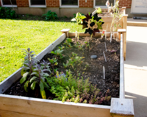 A raised garden bed in the Caroline Garden at Sancta Maria in Ripa in St. Louis.